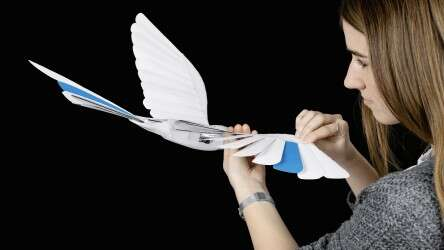 Aerodynamic kinematics: torsional capacity of the wings